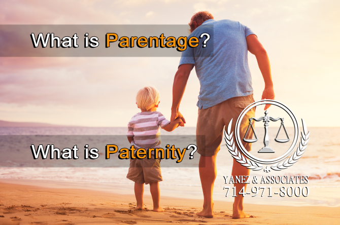 What is Parentage? What is Paternity?
